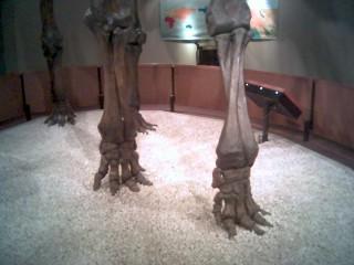 Mammoths In Santa Barbara Natural History Museum